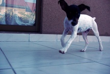 Cleo + Animals / Vida de mi poto y más...