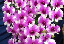 precious flowers