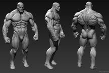 3D muscle Ch