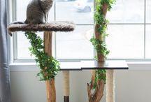arbre chat