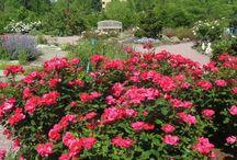 U.S. Botanic Garden / The Botanic Garden in Washington, D.C. is fabulous any time.