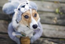 Dog Halloween Costumes / Inspiration for Dog Halloween costumes.