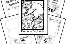 Raccoon Unit Study (HSS)