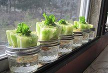 garden vegetable ideas / Plants