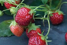 How to Grow Fruits