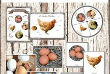 Chicken life circle