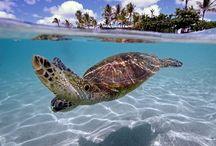Underwater / Diving / Freediving
