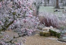 Wonderful Winter Plants / Plants to excite and uplift you in those cold, wet winter months!