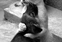友情と愛情