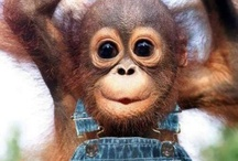 Funny Pet Monkeys / by Funny Pet Pictures