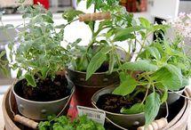 Herbs / Garden