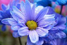 цветы:-D