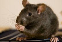 rotter som ikke er på nettstallen