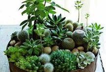 Planten/groen