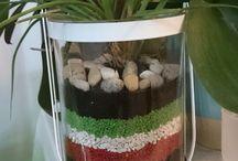 Terrarium / Small garden in a jar