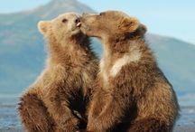 Fuzzy Cuddlies