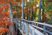 Plan a Trip - Tennessee / by Karen Lewallen