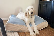 Dog matrass