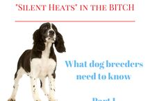 Dogs! / Pics, Vet, Breeding, English Bulldogs!