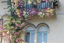 Flowers, balcony, garden