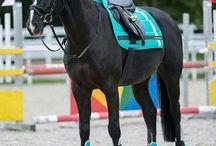 cavalos♡