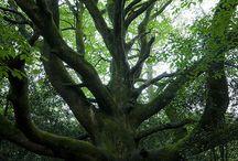 Trees / by Virginia Mott