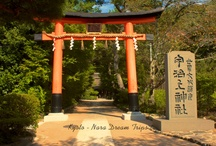 Ujigami Shrine and Kirihara-sui! / This tranquil shrine, surrounded by trees, is located on the banks of the River Uji-gawa, on the slope of Asahi-yama. Ujikami jinja, which was registered in the world heritage list in 1994, was called Rikyu Kamisha until the Meiji Restoration. In the front is a hall of worship that was built in the shindenzukuri style during the early years of the Kamakura period. The beauty of the roof, which was made in accordance with the sugaruhafu design method, is particularly impressive.