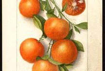 Láminas de Frutas Vintages