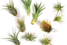 Plants and gardening / by Alicia Kleint Hagan