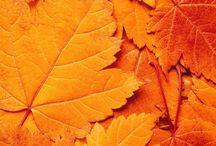 color; orange