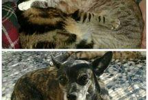 MIS ANIMALES.PETS MINE