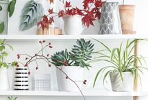 pot plantes vertes