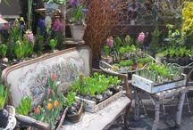 Flowers shop / Flowers bouquet