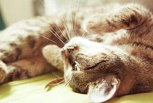 Arredare in presenza di animali domestici / Una raccolta di immagini e contenuti per chi ama gli animali in casa ma desidera che il suo arredamento non venga distrutto