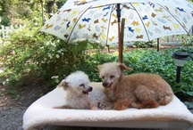 Kuranda Outdoors / Kuranda Dog Beds are raised off the ground, keeping the dogs cooler in the summer, and warm in the winter. Easy to clean, and holds up to extreme conditions!  / by Kuranda Dog Beds