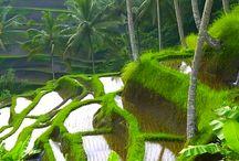 Bali 2015 / Ubud, Bingin, Kitamani Volcano, Tulamben Wreck Snorkeling
