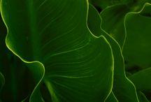 Planten inspiratie