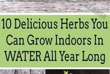 Growing herbs in doors and out doors