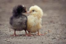 Cute Baby Animals / cute. fluffy. uncoordinated. melt-worthy.