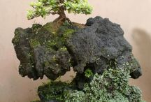 bonsai / by molla cavus