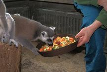 KUCHAŘEM V ZOO / Chcete odhalit tajemství šéfkuchaře kuchyně a dobré výživné kondice našich zvířat? Chcete se seznámit s průběhem přípravy krmné dávky od A až do Z? Přijďte a vyberte si jeden z pečlivě připravených jídelních lístků a zkuste uvařit celodenní menu na míru za asistence odborníků. Více na: http://www.impresio.eu/zazitek/kucharem-v-zoo