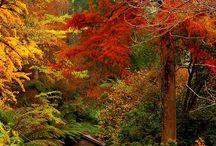 Őszi színek