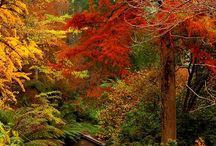 Fall Decorations and Treats / My favorite season