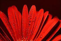 Red Flowers / www.missdinkles.com