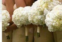 Flower ideas for the wedding / by Holly Lynne