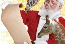 Holidays at the Zoo