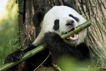 Bambú .Ecológico..