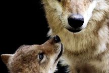 Wolves ❤