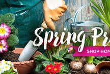 Spring Prep: Gardening Tools