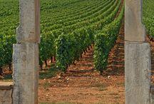 Grapes, Vines & Vineyards / The origines, the soil, the terroire.